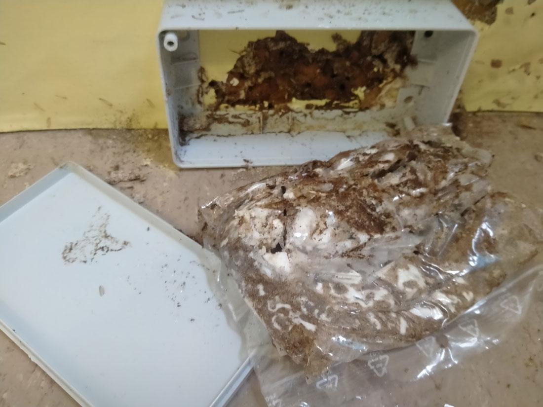 especialistas tratamientos termitas Pamplona
