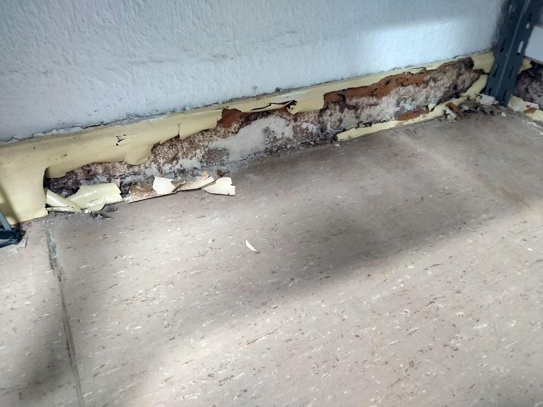 tratamiento madera pamplona carcoma termitas