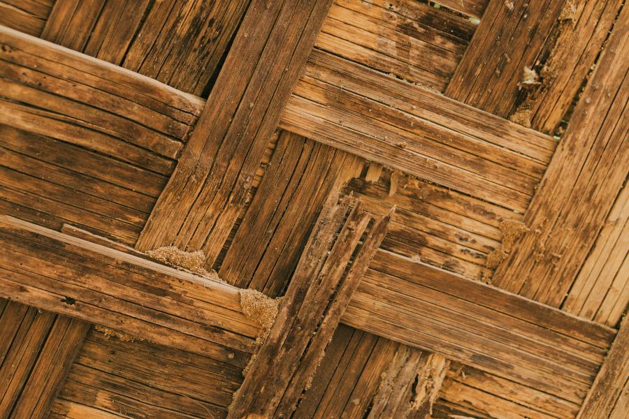 madera con termitas