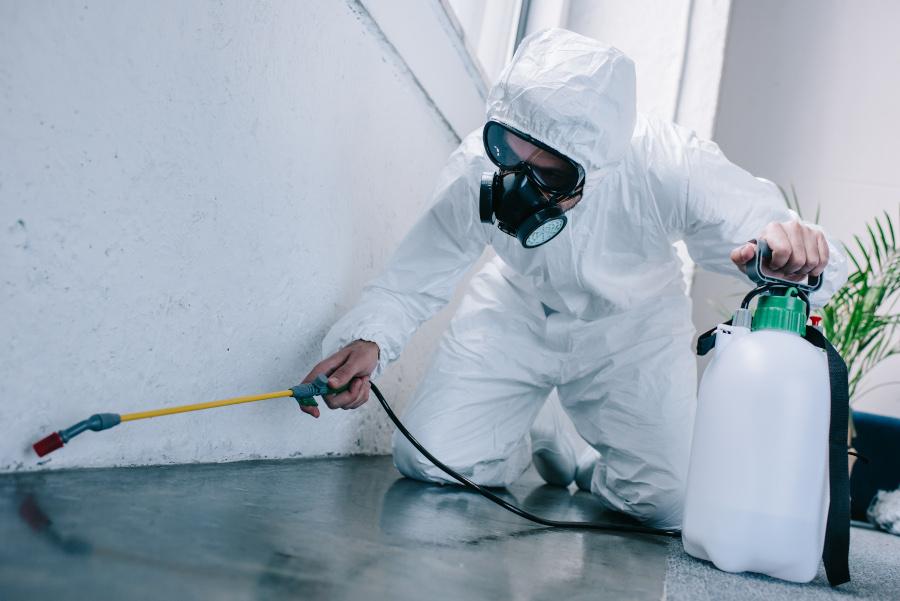 Empresa control de plagas
